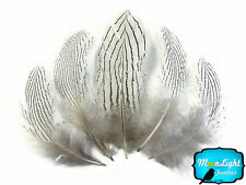 6 Pieces Large Natural Silver Pheasant Barred Plumage Feathers Fly Tying Jewelry