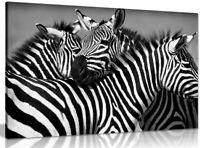Black & White Zebra Canvas Wall Art Picture Print