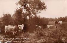 uk372 nature in a quite corner london cows real photo  uk