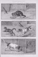 1886 - Antique Print FINE ART Way of the World Cats Dogs Dadd Chase Bird  (130)