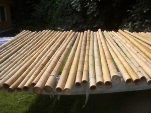Bambus Bambusstangen Bamusrohr Bambusstange Bambushalm 10 Stk.195cm Ø 3-4 cm