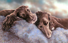 "COCKER SPANIEL CHOCOLATE WORKING FIELD DOG LIMITED EDITION PRINT ""Sleepy Heads"""