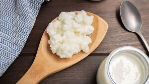 Grains de kéfir de lait 15 à 20 gr bonne souche