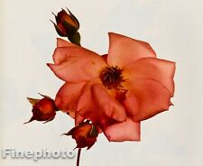 1980 Vintage 11x14 FLOWER Botanical Fine Art ROSE Photo Litho Plate IRVING PENN