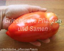 🔥 🍅 Howard German Riesen-Flaschen-Tomate alte Tomaten Sorte 10 frische Samen