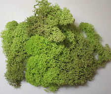 Foliage Lichen Moss for Model Trees Bushes Hedges Spring Green 50g bag