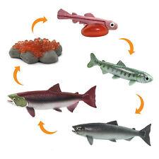 Life Cycle Of A Salmon Safariology Safari Ltd 100267 NEW IN STOCK