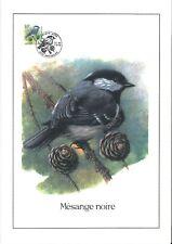 FDC 2804 - Oiseau Buzin sur gravure format A4 !