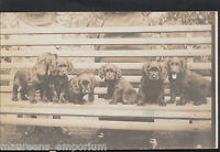 Animals Postcard - Dogs - Group of Puppies on a Bench   RT226