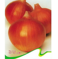 FD2490 Red Onion Seed Vegetable Seed Hot Seeds ~1 Pack 20 Seeds~ ✿