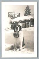 Saint Bernard w Elixir Barrel RPPC Christmas Tree Store—Vintage Photo 1950s