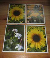 Postkarte Sammlung _ 4 Stück _  Blumen _  Sonnenblume _    Botanik   Klappkarten