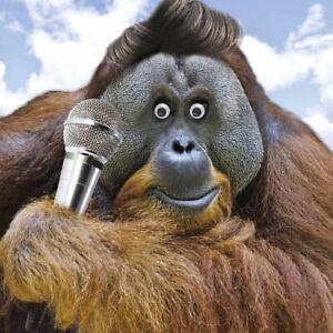 The Lurv Monkey Googlies Birthday Card Tracks Wobbly Eyes Greeting Cards