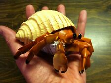 Hermit Crab in Shell Large life-sized Quality PVC Figurine Hand Painted S267529