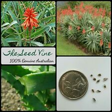 10+ KRANTZ ALOE SEEDS (Aloe arborescens) Better than ALOE VERA Medicinal