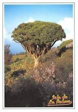 Spain Isla de La Palma Garafia, Drago en Las Tricias