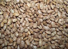 15 Lb Dry Pinto Beans Bulk Emergency Food. Free Shipping. Triple Cleaned