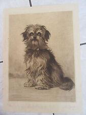 Ferdinand OGER (1872-1929) GRANDE EAU FORTE SIGNEE AU CRAYON CHIEN DOG 1880