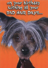 Bad Hair Days Chinese Crested Dog Funny Humorous Birthday Card