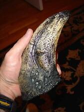 "T-Rex - Tyrannosaurus Rex Toe Claw Replica - Giant 9""! Great Dinosaur Gift!"