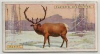Wapiti Elk 1924 Trade Ad Card