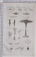 1788 Antico Stampa Naturale Storia Piume Acqua Beccuccio Piante Ragno Ragnatele