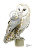 Bird BARN OWL colour pencil drawing print A4 / A3 signed by UK artist artwork