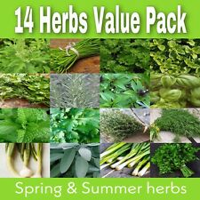 14 Herb Seeds Value Pack Spring Summer Parsley Thyme Mint Dill Chives Coriander