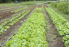 Graines à semer Potager : Salades Laitues - Port Offert