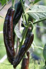 PASILLA BAJIO (CHILACA or CHILI NEGRO) CHILLI - 40 seeds (HERITAGE)