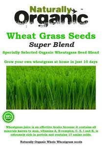 500g - 1kg ORGANIC WHEATGRASS SEED BLEND SPECIALLY SELECTED FOR MAXIMUM GROWTH