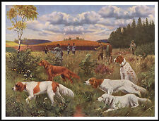 Irish Red And White Setter Men And Dogs Shooting Scene Great Dog Print Poster