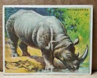 T29 Hassan Cigarettes Rhinoceros Card (B-3)