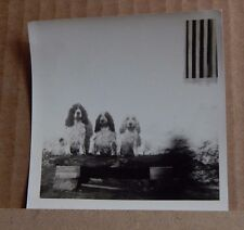 Photograph Social history 3 Spaniels Sat on Bench Comical pose 1960s