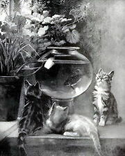 Dolph Art Print Cats Curious Hungry Kittens Watch Goldfish Swimming in Fish Bowl