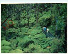 Picture Postcard::Hawaii, Hawaii Volcanoes National Park, Hapu Fern Rainforest