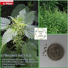 100 STINGING NETTLE SEEDS(Urtica dioica); Culinary herb