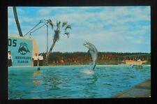 1950s? Trained Porpoise Plays Football Oceanarium Marine Studios Marineland Fl