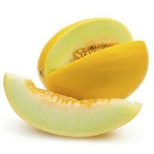 Sweet & Delicious*HONEYDEW*Melon* 15-Finest Seeds*hardy Variety*UK