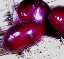 200 Graines de Oignon Rouge Créole / Potager Légumes Plantes
