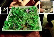 Japan. Wassergarten / Aquariendeko Ideen für das Aquarium zur Aquariengestaltung