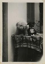 PHOTO ANCIENNE - VINTAGE SNAPSHOT - ANIMAL CHIEN TABLE GAG BLAGUE DRÔLE - DOG