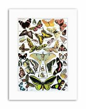 BUTTERFLY MOTH COLOUR Poster Illustration Drawing Canvas art Prints