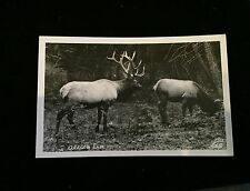 RPPC, Real Photo, Postcard, Oregon, Elk