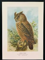 Antique Unframed Bird Print-Tengmalm's Eagle Owl SCHLEIEREULE-Plate Naumann-1896
