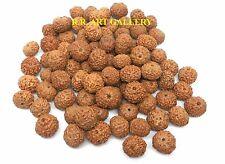 8 Mukhi Rudraksha / 8 Face Ketu Rudraksh - Java Bead -Wholesale lot of 21 beads