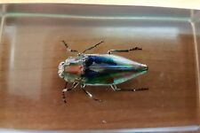Vintage Colorful Beetle (Unknown Species) Specimen In Perspex Holder Spectacular