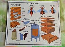 Cartexpo Affiche Scolaire set de table Apiculteur Abeille Reine Extracteur voile