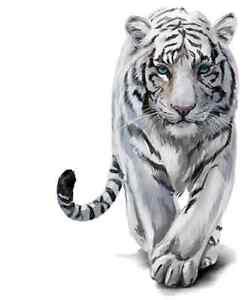 WHITE TIGER IRON ON T SHIRT TRANSFER