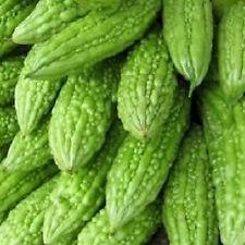 V029 Bitter Melon Canton Green x10 seeds